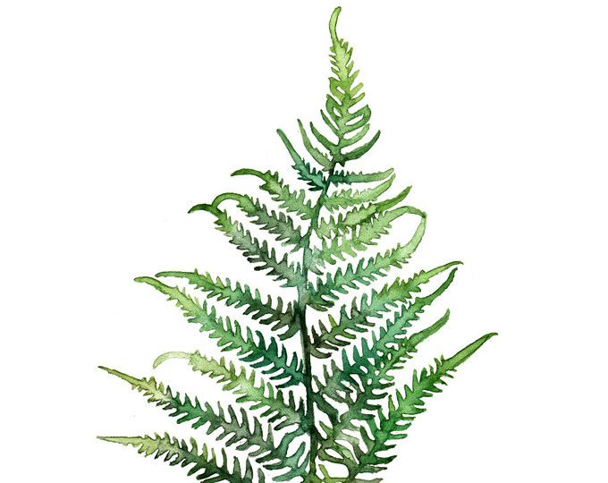 Botanical leaf navy watercolor. Woodland clipart green fern