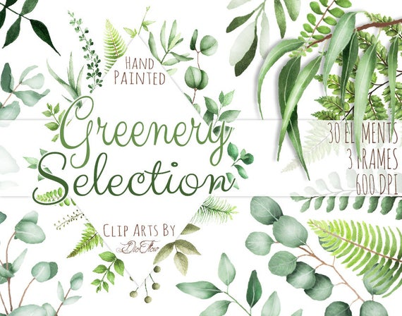 Woodland clipart greenery. Watercolor leaf eucalyptus clip