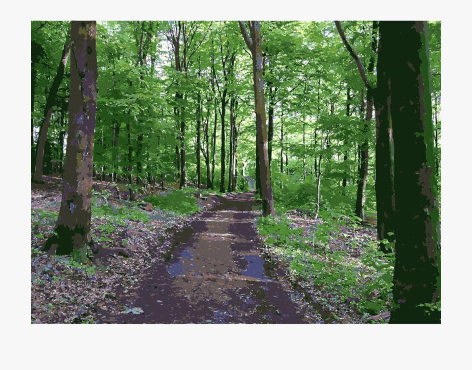 Woodland clipart natural vegetation. Clip art transparent tropical