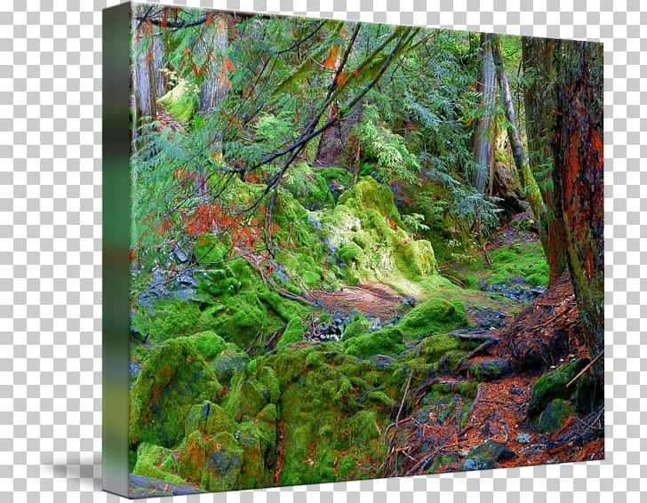 Temperate broadleaf and mixed. Woodland clipart natural vegetation