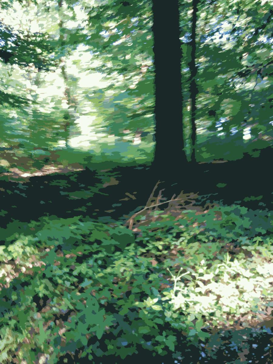 Green grass background forest. Woodland clipart natural vegetation