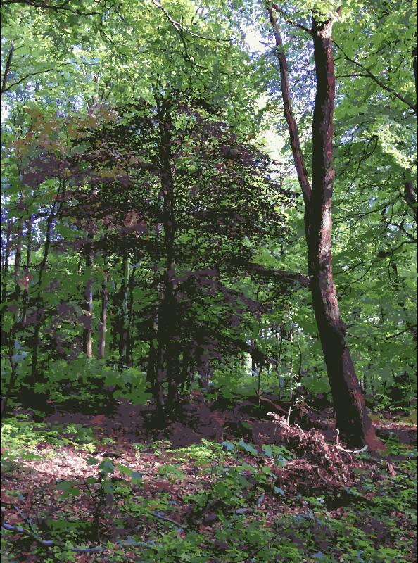 Woodland clipart natural vegetation. Jungle tree forest transparent