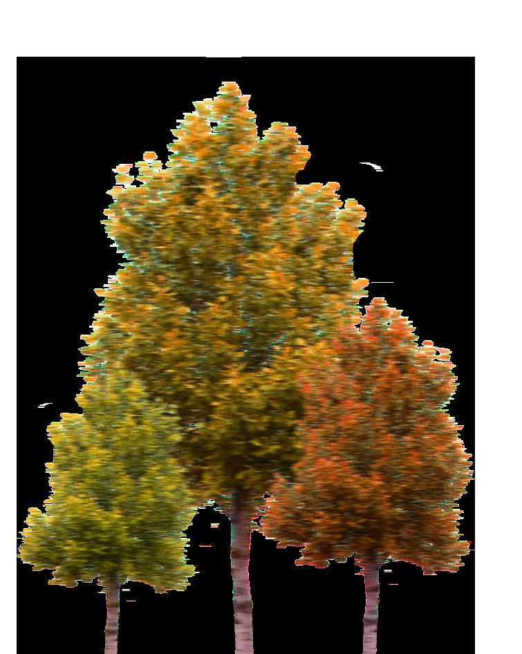 Acadia road trips maine. Woodland clipart pine tree