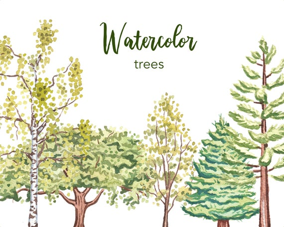 Watercolor png set forest. Woodland clipart pine tree