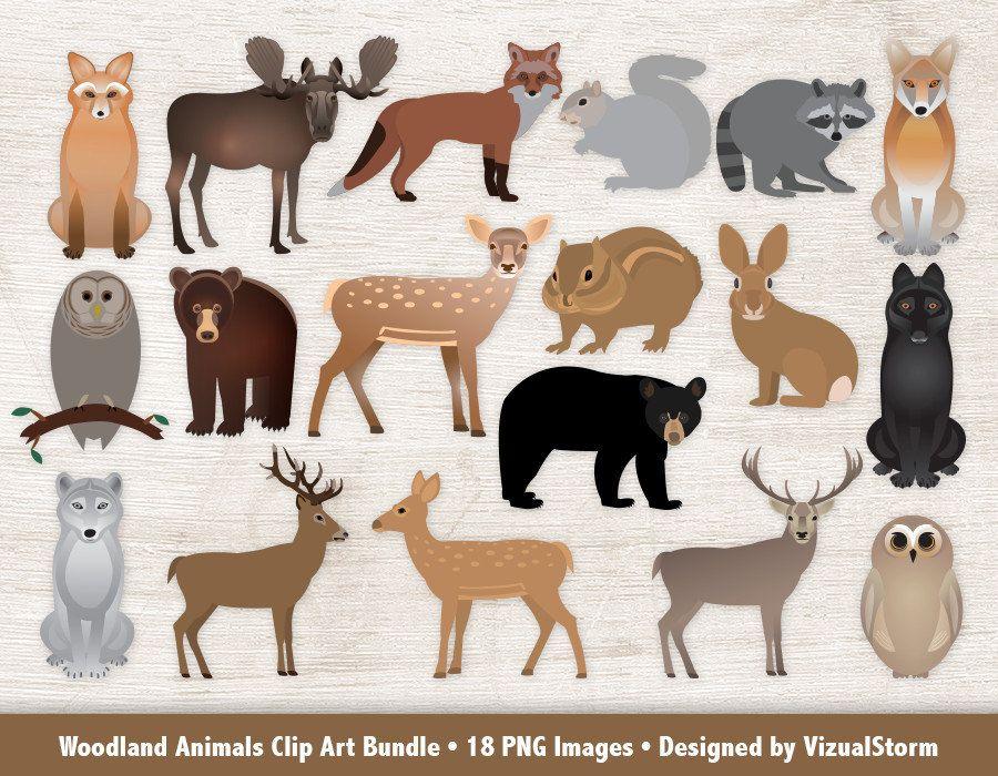 Woodland clipart wild animal. Animals clip art bundle