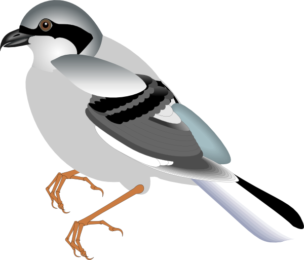 Worm clipart bird. Standing clip art at