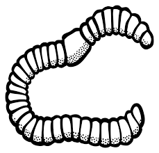 Worm clipart black and white. Image result for clip