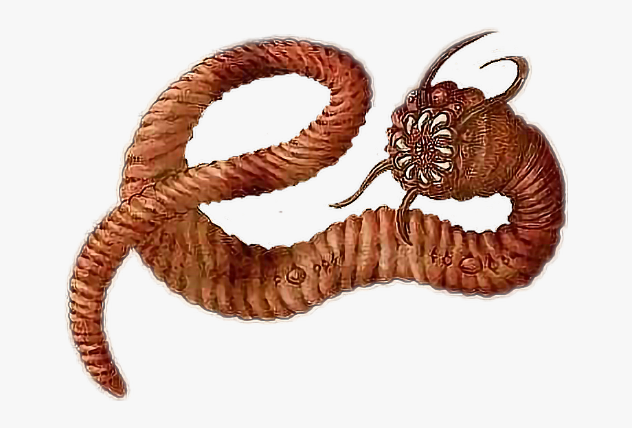 Worm clipart centipede. Worms with teeth cliparts