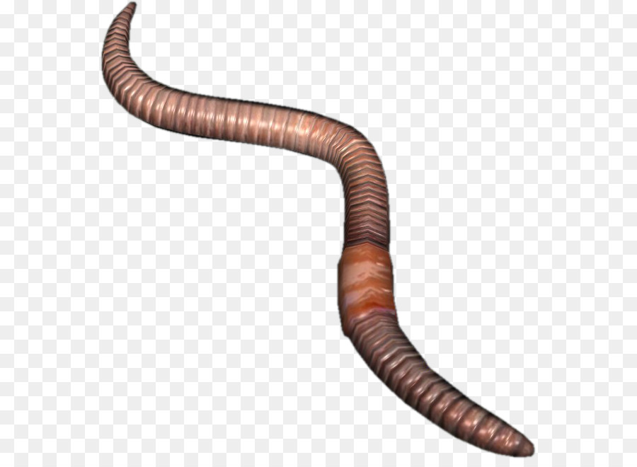 Earthworm png transparent . Worm clipart earthwarm