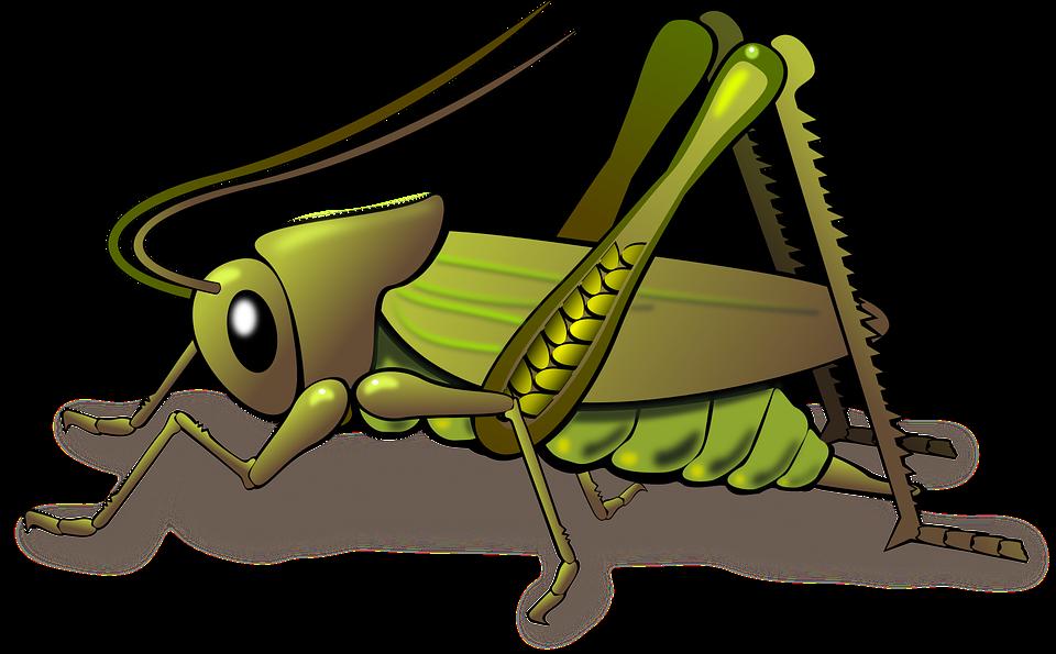 Worm clipart invertebrate. Cartoon grasshopper shop of