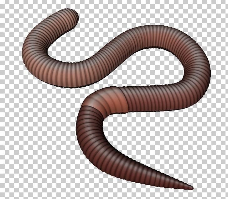 Earthworm png animal annelid. Worm clipart invertebrate