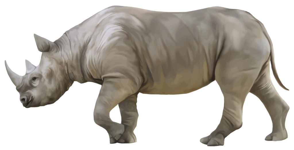 Rhino png animals typegoodies. Worm clipart realistic