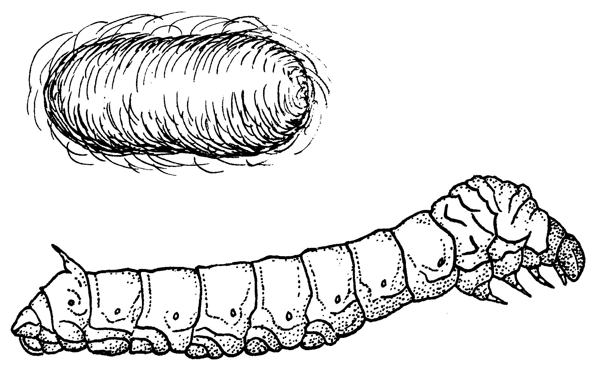 Worm clipart silkworm. Station