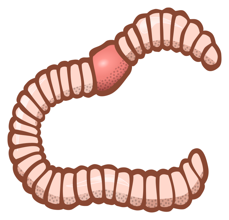 Coloured medium image png. Worm clipart small worm