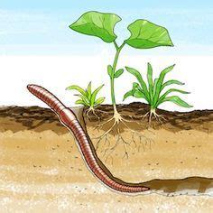 In dirt clip art. Worm clipart soil clipart