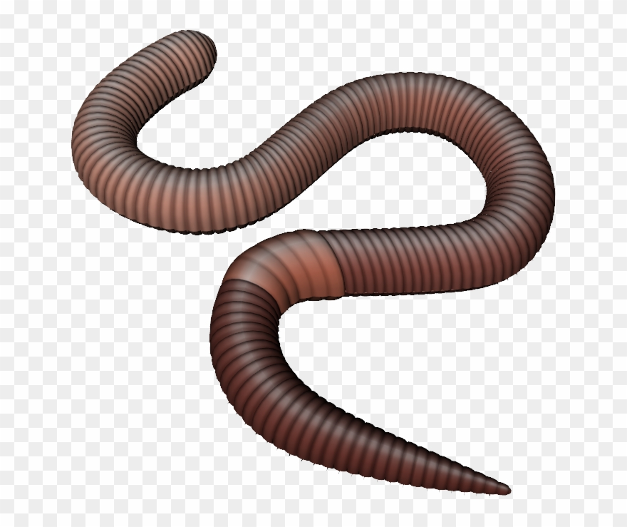 Png earthworm . Worm clipart transparent background