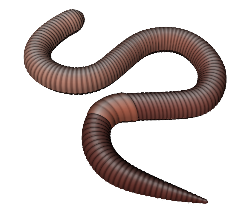Worm clipart two. Worms png images free