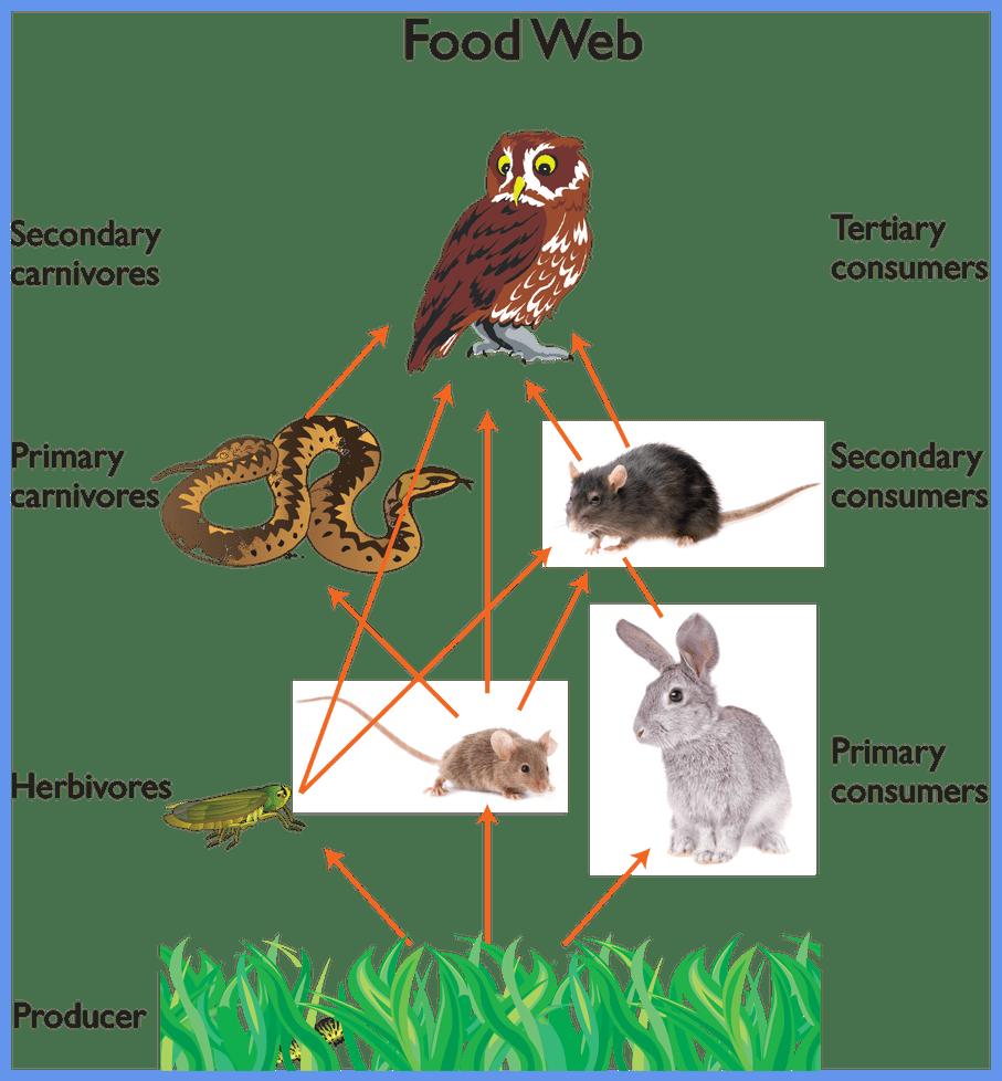 Inspiring owl food web. Worm clipart underground