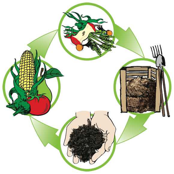 Worm clipart vermicomposting. The stuff beneath your