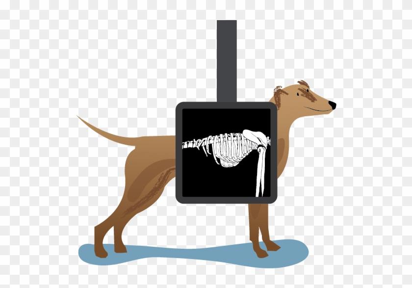 Xray clipart animal xray. Machine to help save