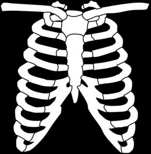 X ray at clker. Xray clipart clip art
