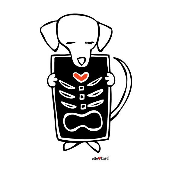 Xray clipart dog xray. Elle karel original illustration