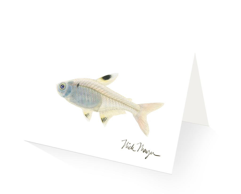 Xray clipart fish. Images of x ray