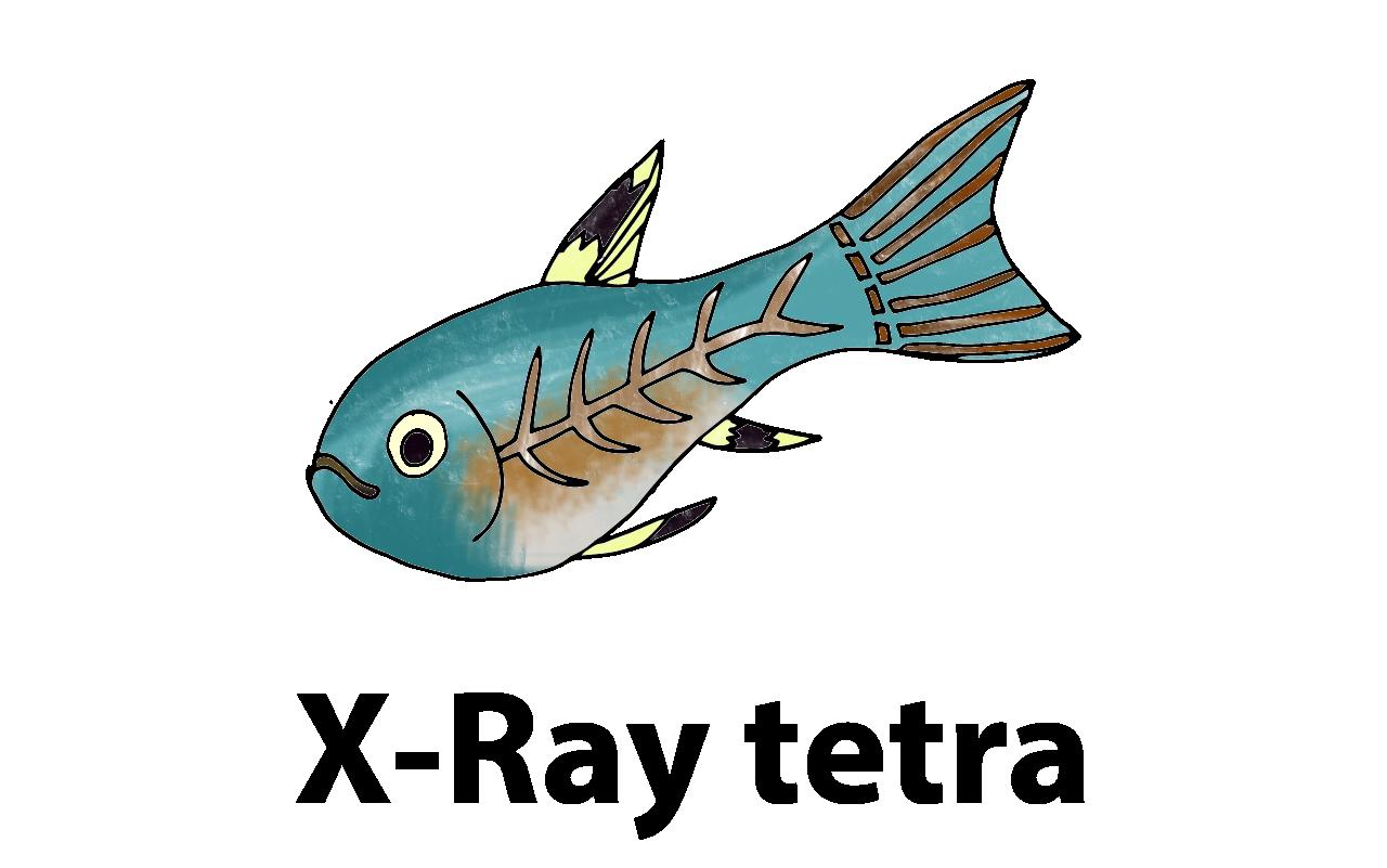 Xray clipart fish.  x ray tetra