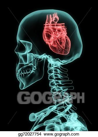 Drawing of skull with. Xray clipart heart