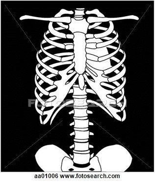 Chest x ray stock. Xray clipart medical