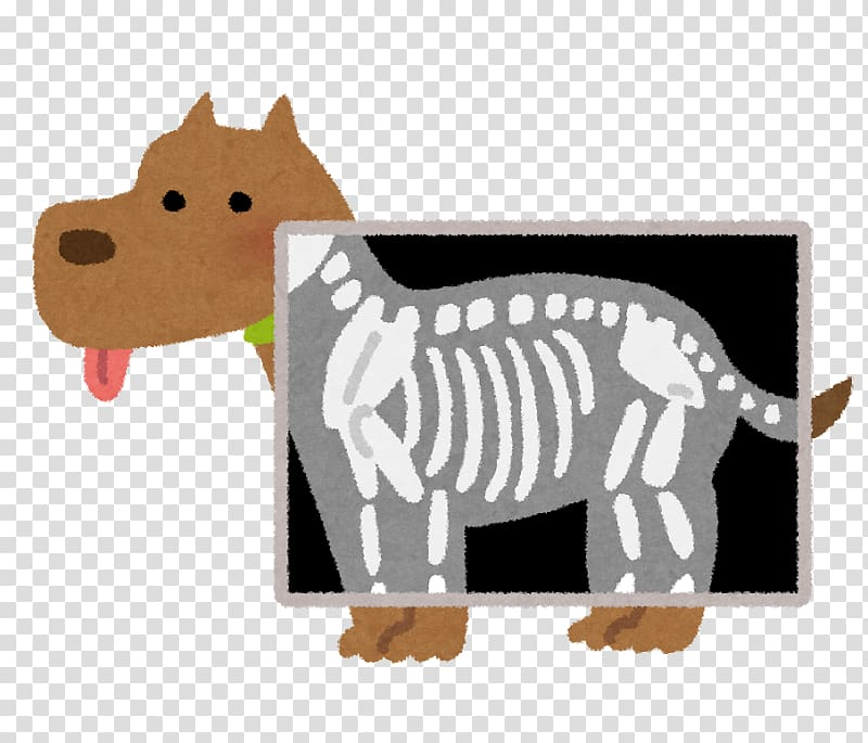 Radiography diagnostic test medical. Xray clipart pet