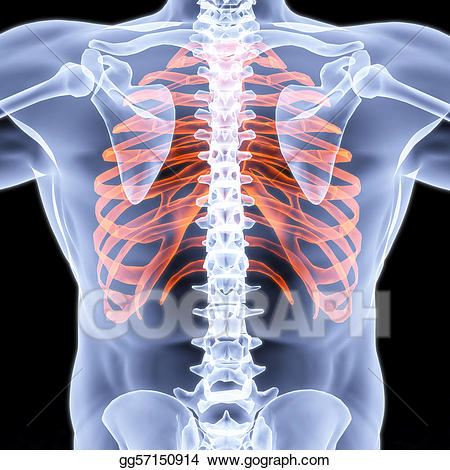 Xray clipart thorax. Stock illustration breast illustrations