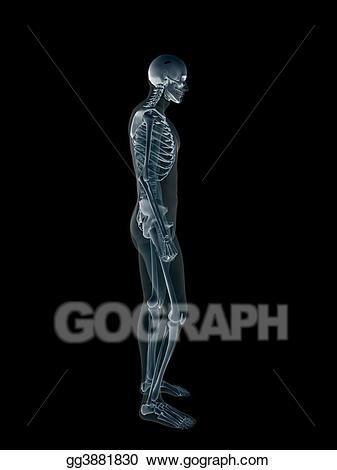 X ray of the. Xray clipart xray body