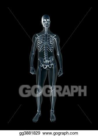 Xray clipart xray body. X ray of the