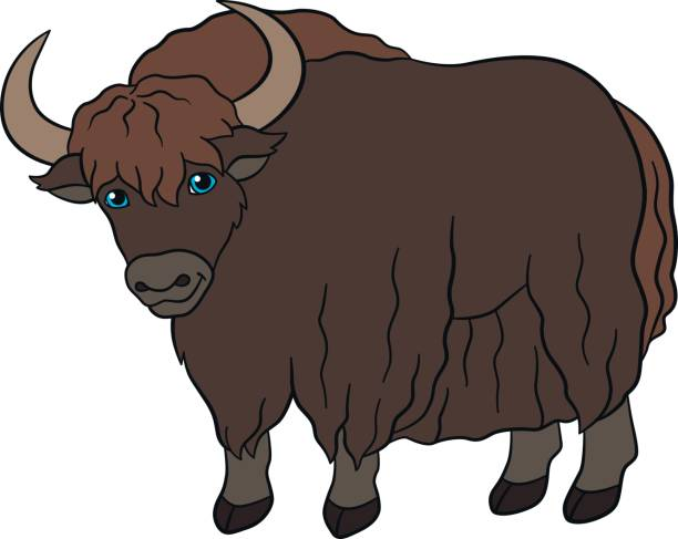collection of images. Yak clipart