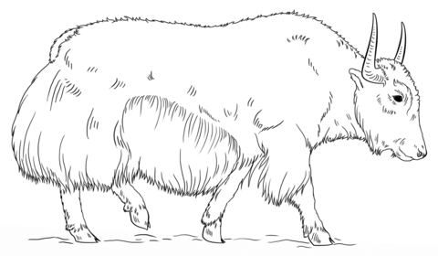 Yak clipart coloring page. Walking free printable pages