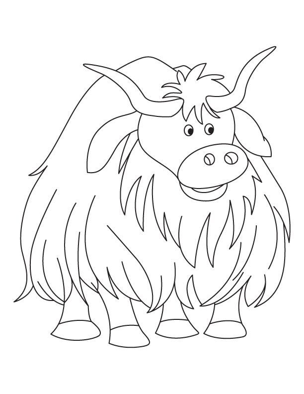 Yak clipart colouring page. Pin by margaret jaeger