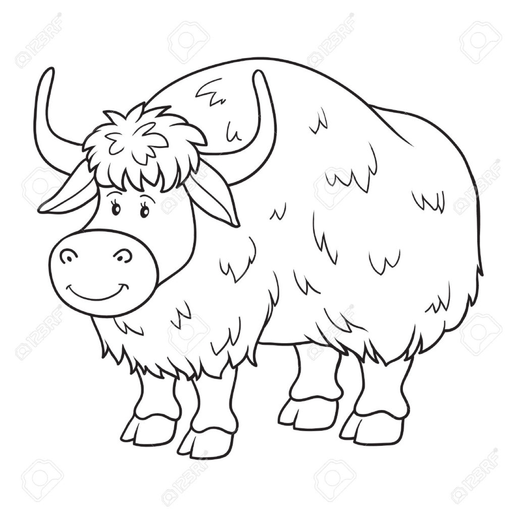 Yak clipart colouring page. X free clip art