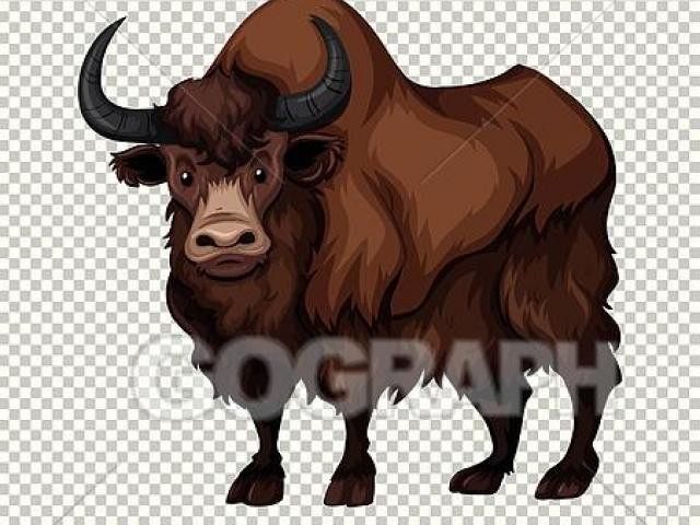 Free download clip art. Yak clipart female buffalo