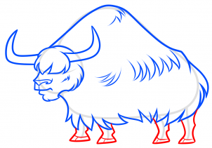 Yak clipart sketches. Drawing a step by
