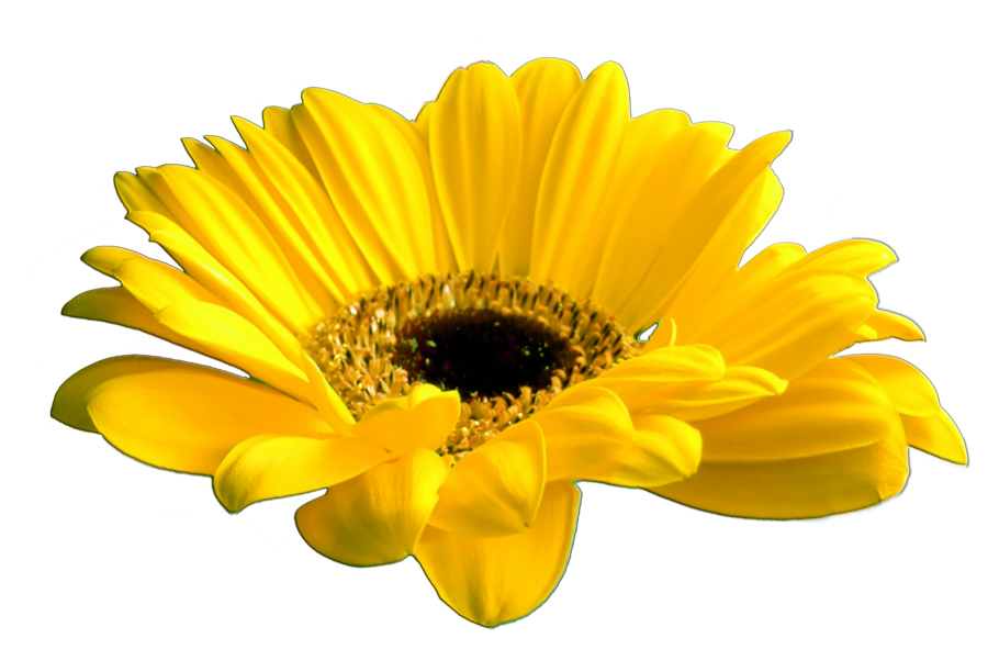 Beautiful flowers various pictures. Yellow flower png