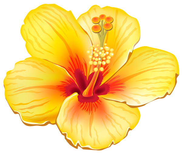 Yellow flower png. Exotic clipart picture tattoos
