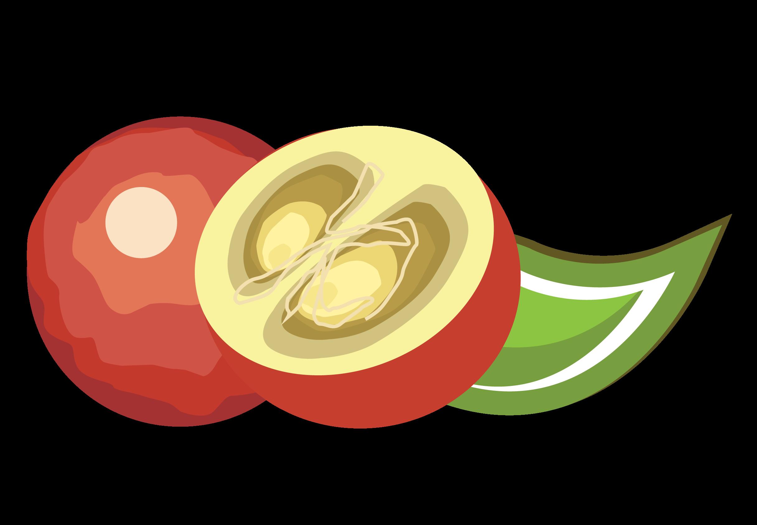 Camu fruit me contains. Yogurt clipart calcium food