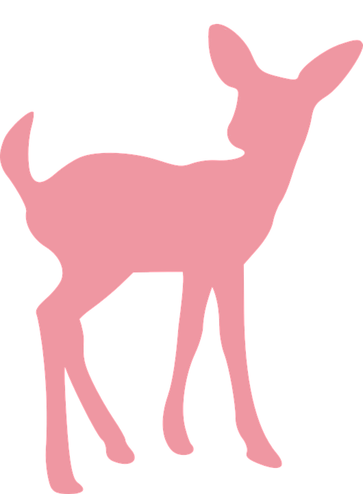 Young clipart cute baby. Wild animal png transparent