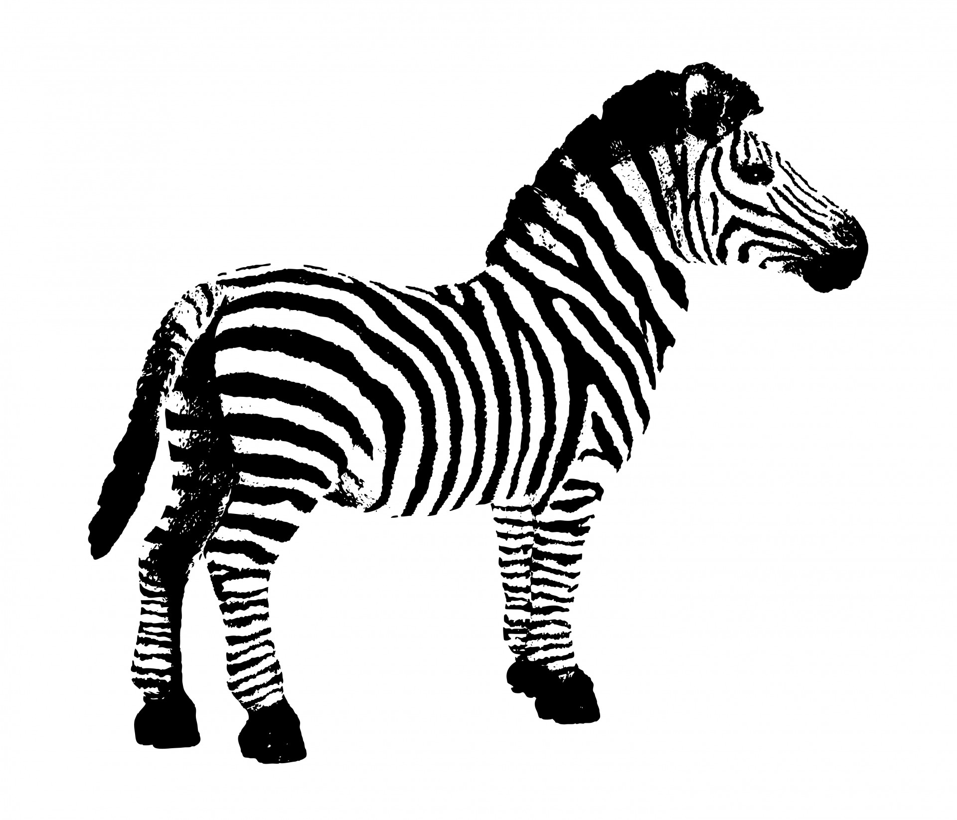 Free stock photo public. Clipart zebra
