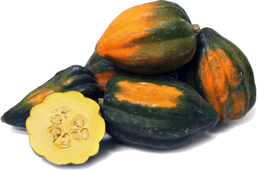 Png free images toppng. Zucchini clipart acorn squash