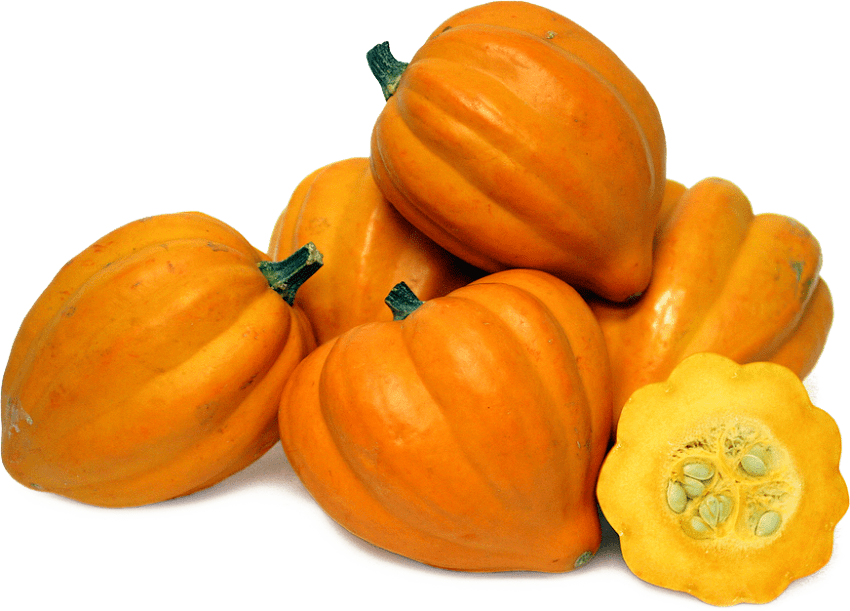 Zucchini clipart acorn squash. Png file free images