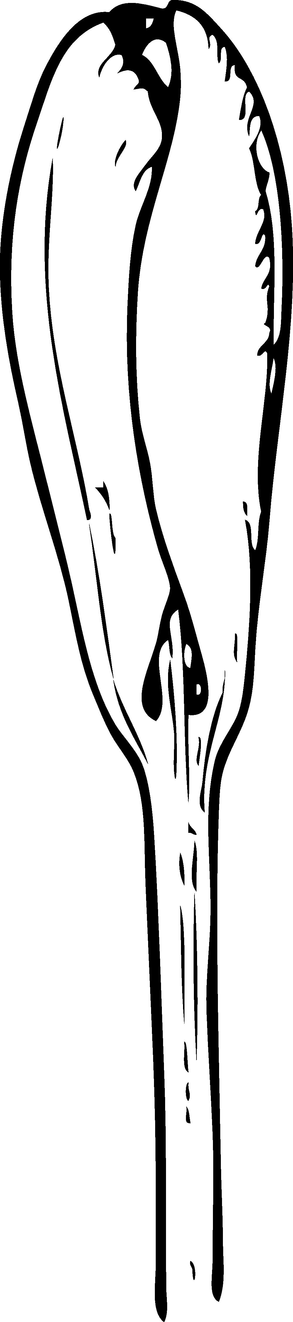 Zucchini clipart black and white. Images zipper