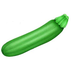 Zucchini clipart clip art. Free download on clipartbarn