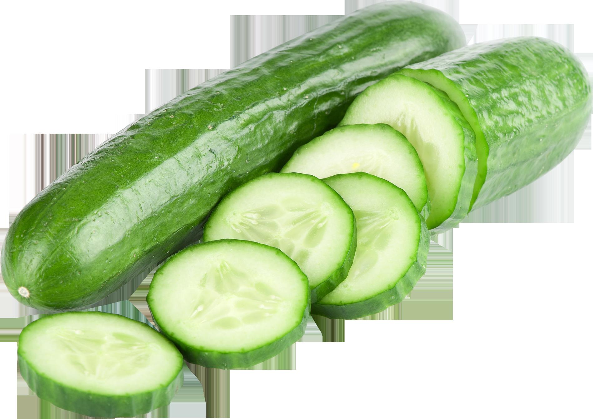 Zucchini clipart gourd. Elkos agro kultura cucumber